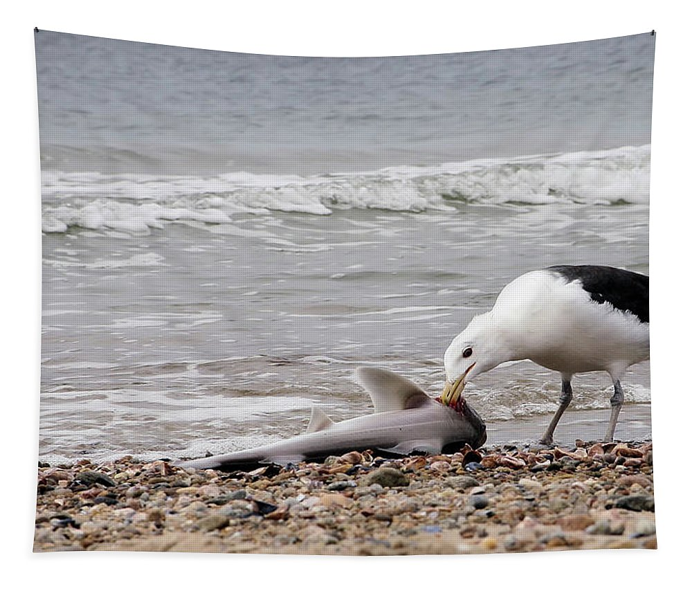 Seagulls Tapestry featuring the photograph Seagulls Catch Of The Day by Karol Livote