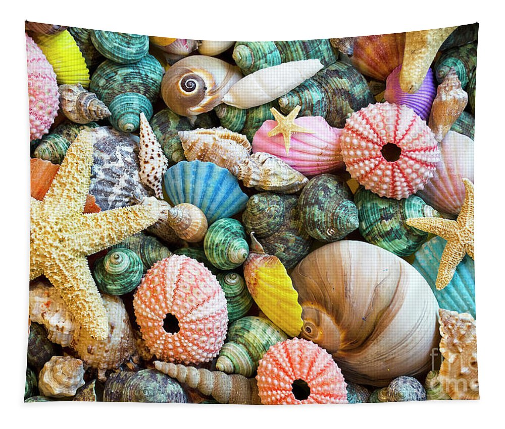 Sea Shell Tapestry featuring the photograph Seashells 2 by Bob Christopher