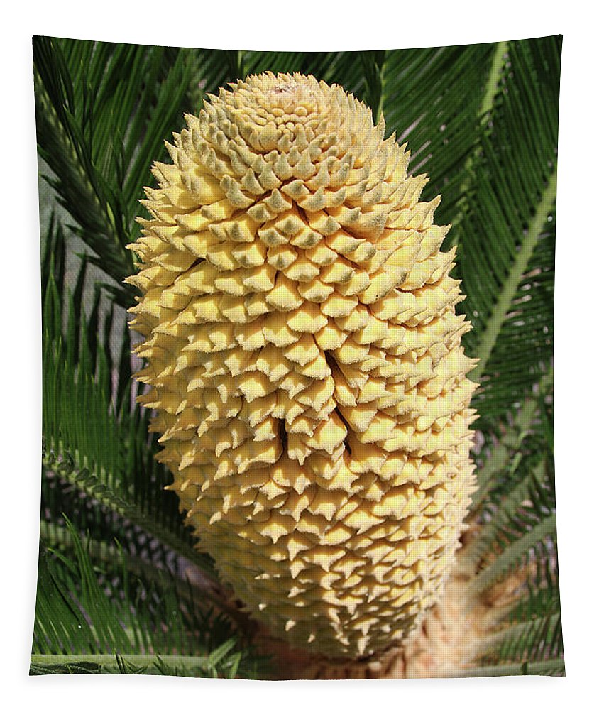 Sago Palm Flower Tapestry featuring the photograph Sago Palm Flower by Tom Janca