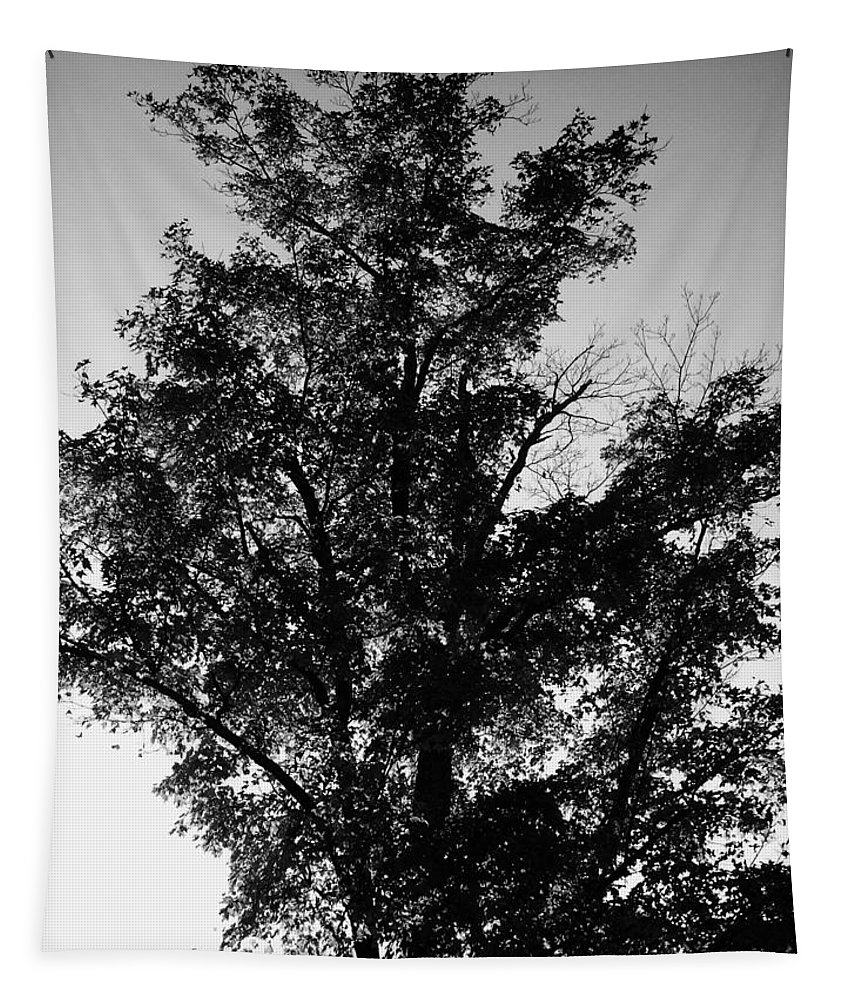 Botanic Tapestry featuring the photograph September Tree ... by Juergen Weiss