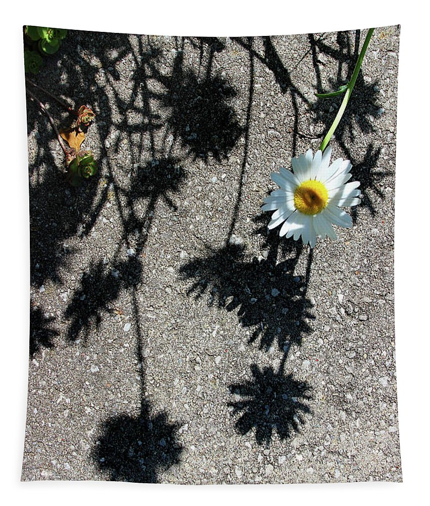 Isolated Tapestry featuring the photograph Shadow Daisy by Karen Adams