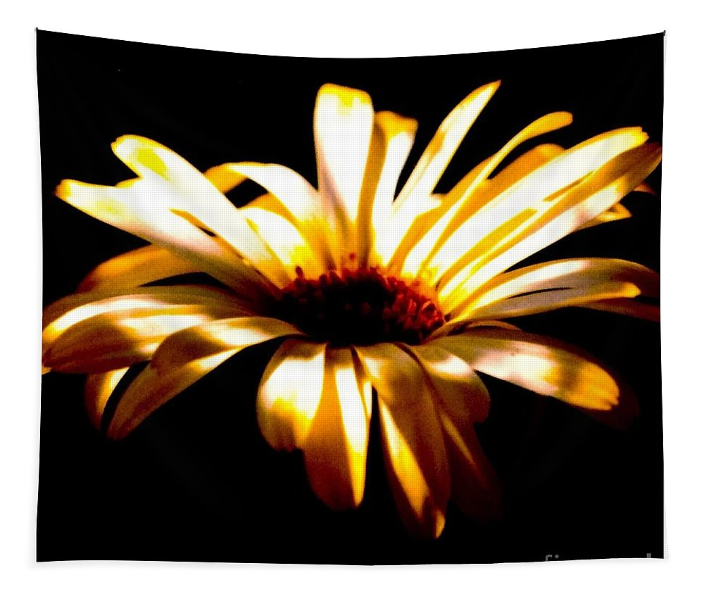 Shasta Tapestry featuring the photograph Shasta Daisy On Black Backgroun by Debra Lynch