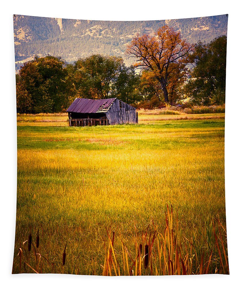 Shed Tapestry featuring the photograph Shed In Sunlight by Marilyn Hunt