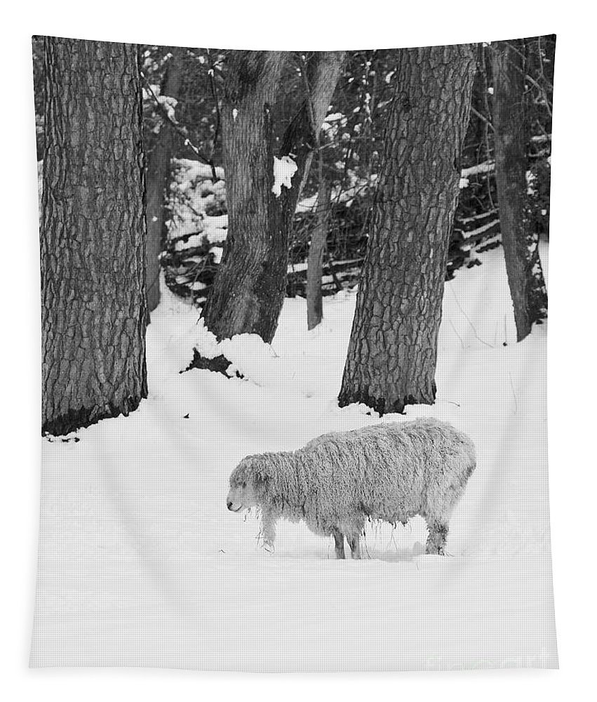 Sheep Tapestry featuring the photograph Sheep In Winter by Rachel Morrison
