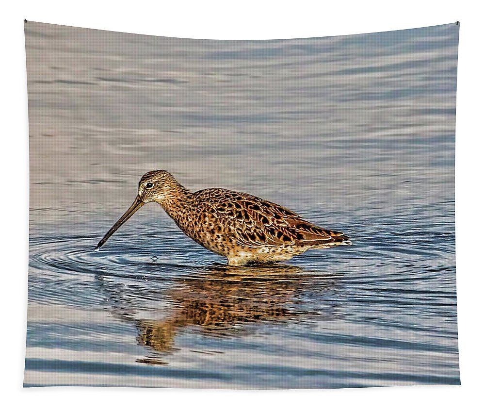 Short Billed Dowitcher Tapestry featuring the photograph Short-billed Dowitcher by HH Photography of Florida