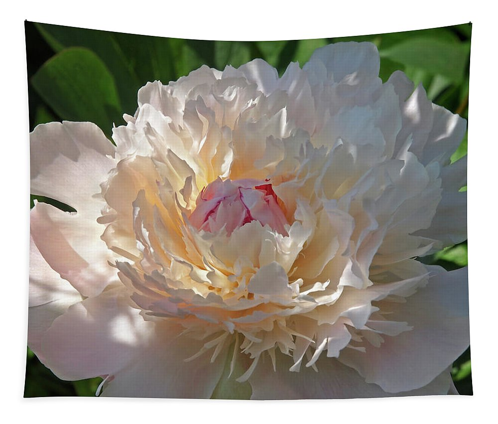 Peony Tapestry featuring the photograph Shy Beauty by Gill Billington