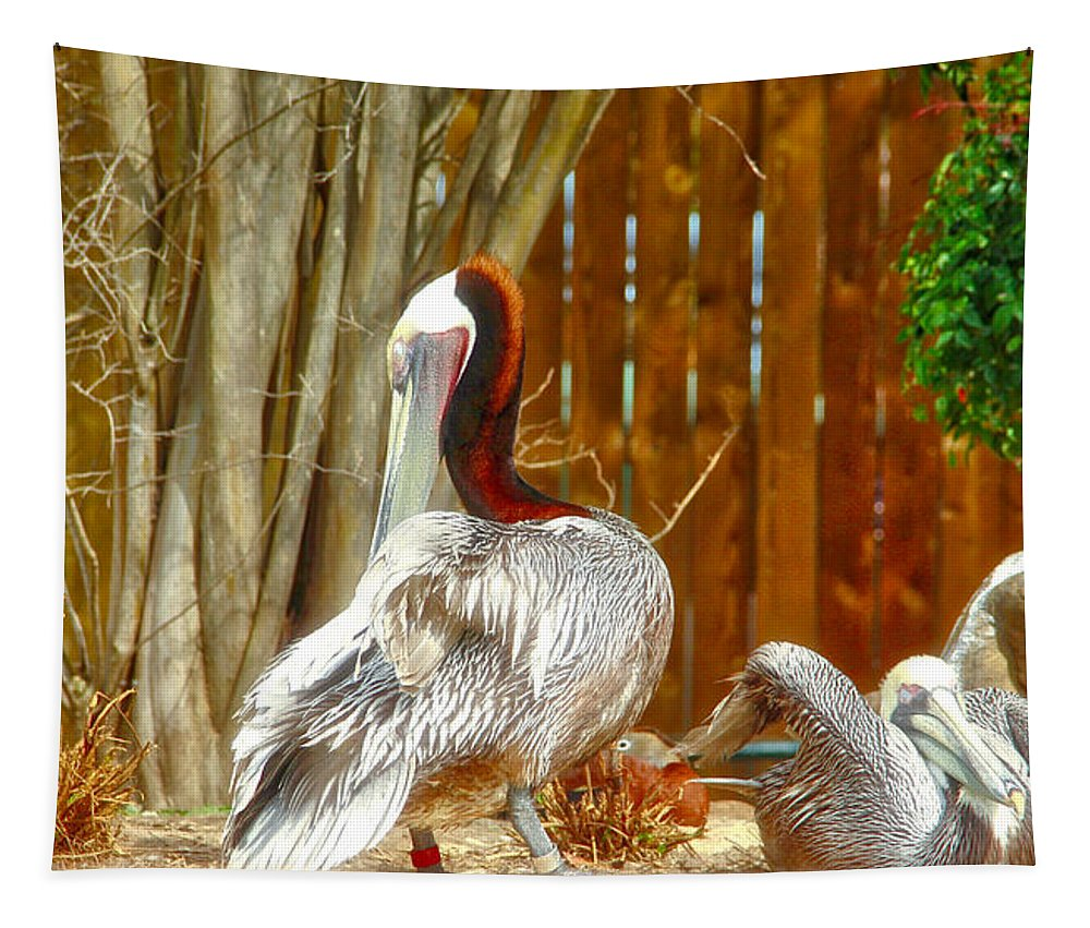 Pelicans Tapestry featuring the photograph Shy by Linda James