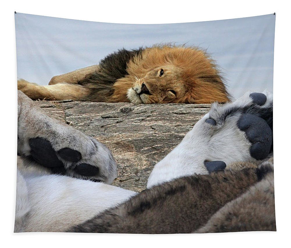 Lion Tapestry featuring the photograph Siesta Time For Lions In Africa by Gill Billington