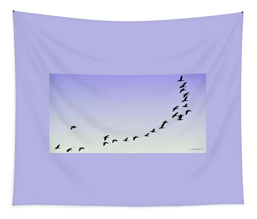 2d Tapestry featuring the photograph Silhouetted Flight by Brian Wallace
