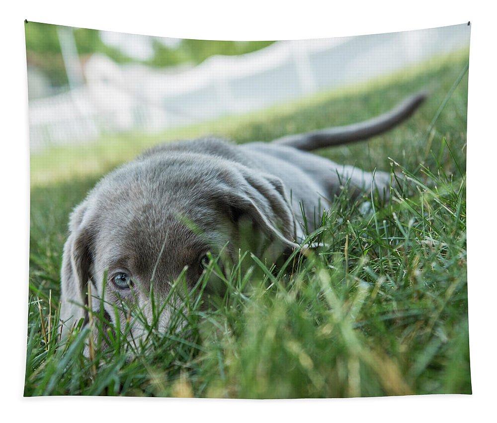 Silver Labrador Retriever Tapestry featuring the photograph Silver Labrador Retriever by Iris Richardson