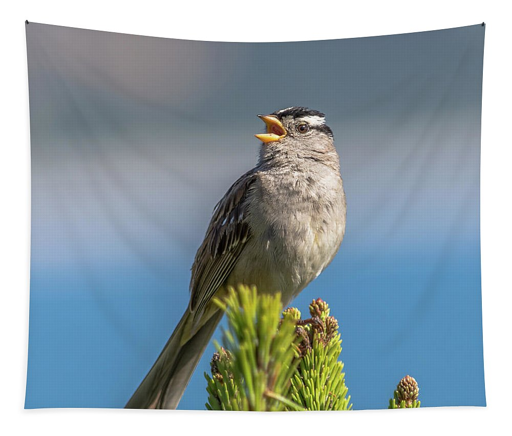 Adult Tapestry featuring the photograph Singing Sparrow by Marv Vandehey
