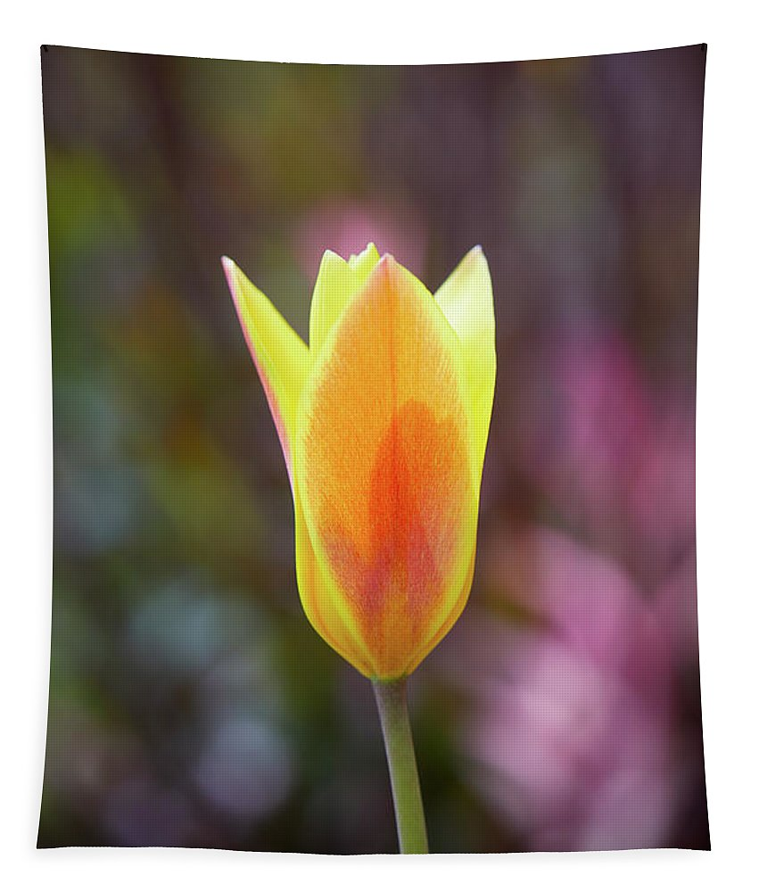 Tulip Tapestry featuring the photograph Single Tulip by Garden Gate magazine
