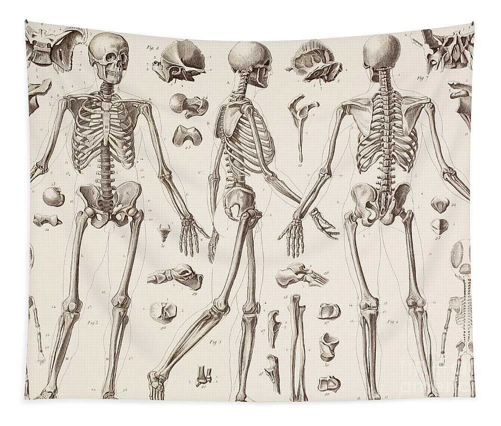 Skeleton Tapestry featuring the drawing Skeletons by English School