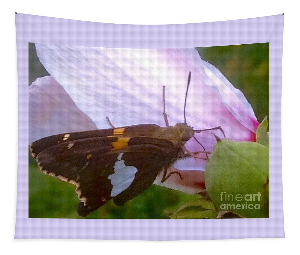 Skipper Tapestry featuring the photograph Skipper Butterfly With White And Orange Colors by Debra Lynch