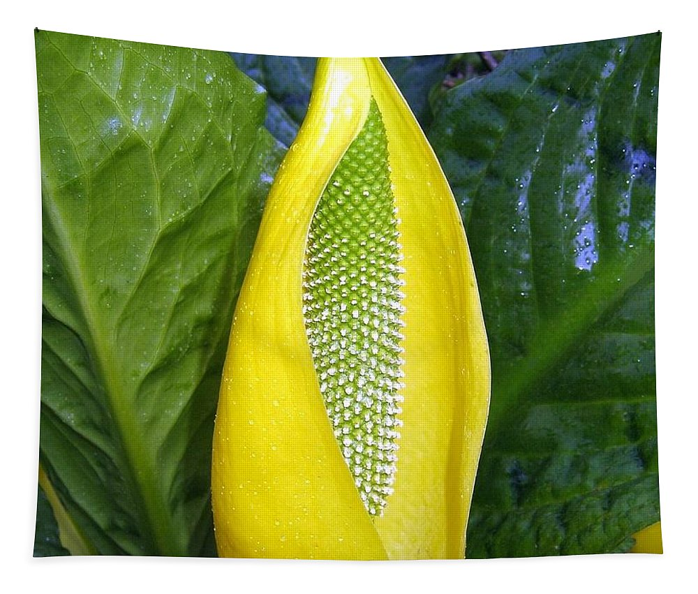 Skunk Cabbage Tapestry featuring the photograph Skunk Cabbage by Will Borden