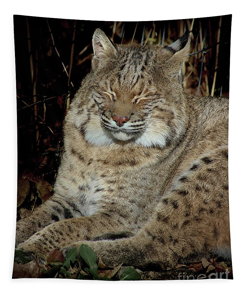 Bobcat Tapestry featuring the photograph Sleepy Bobcat by Karen Adams