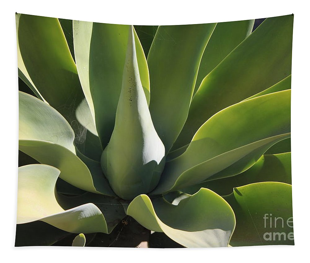 Agave Tapestry featuring the photograph Smooth Agave by Carol Groenen
