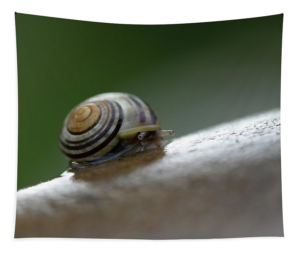 Snail Tapestry featuring the photograph Snail On Rock by Barbara Treaster