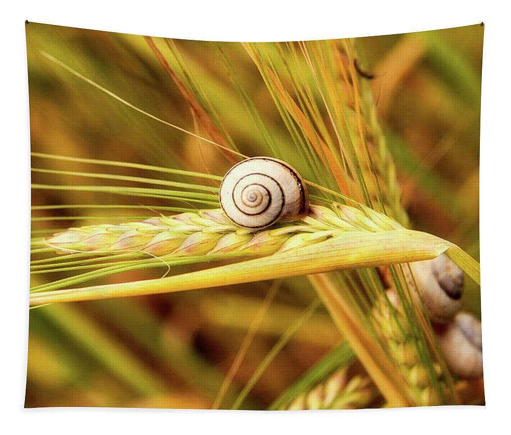 Wheat Tapestry featuring the photograph Snails On Wheat by Cathy Mayne
