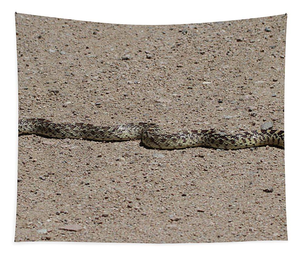 Snake On The Road Tapestry featuring the photograph Snake On The Road by Tom Janca