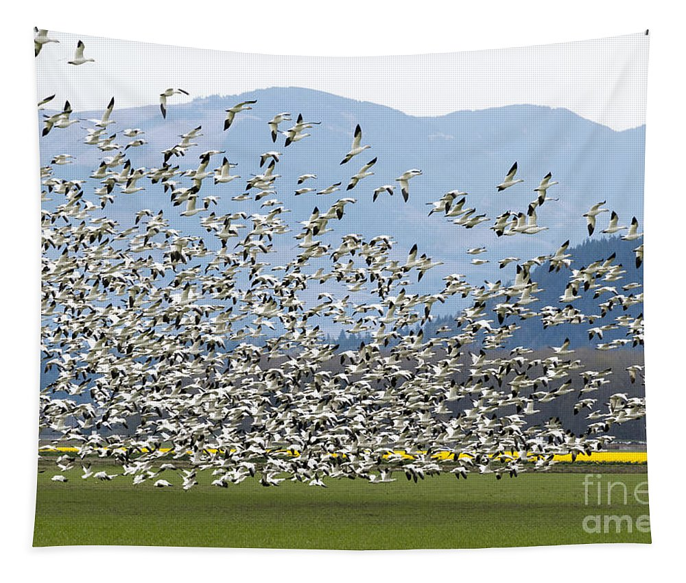 Snow Geese Tapestry featuring the photograph Snow Geese Exodus by Mike Dawson