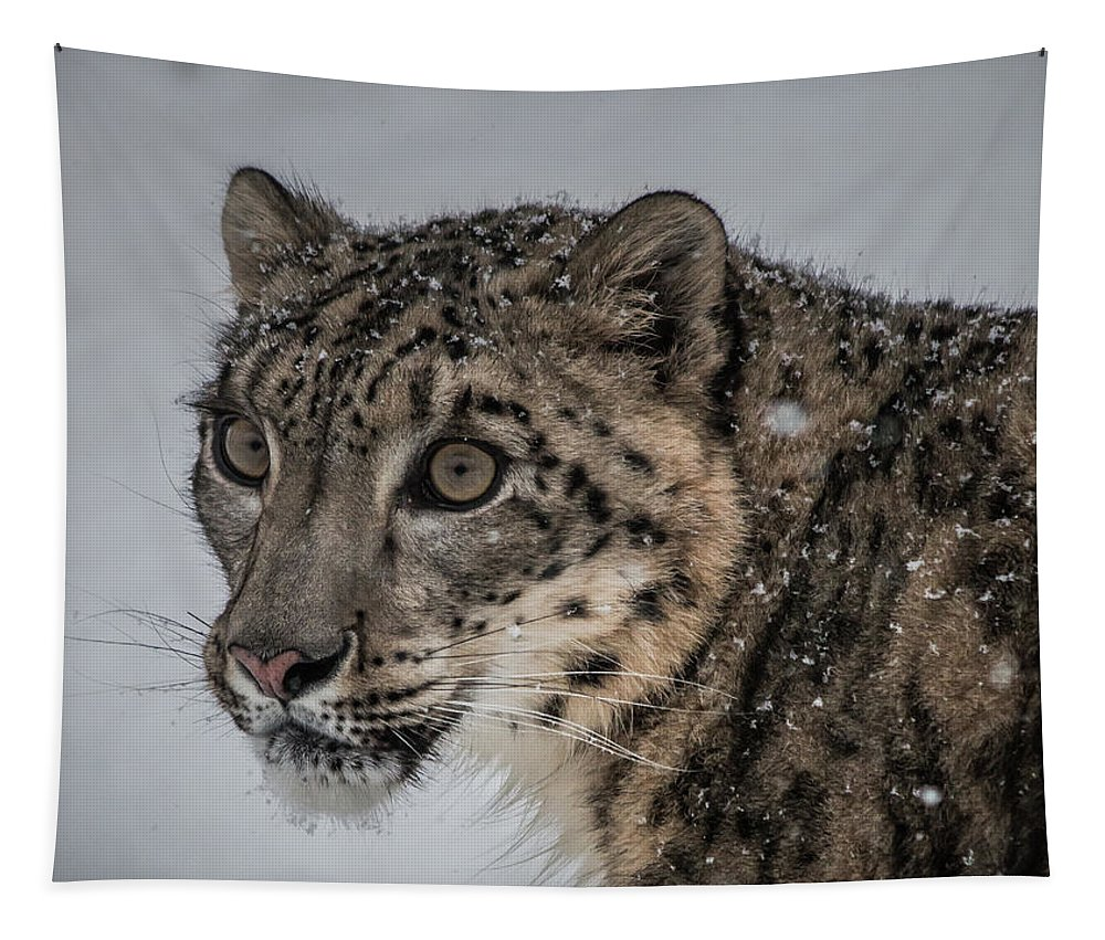 Tapestry featuring the photograph Snow Leopard 2 by Teresa Wilson