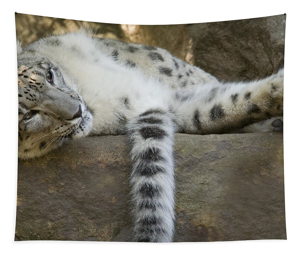 Snow Leopard Tapestry featuring the photograph Snow Leopard Nap by Mike Dawson