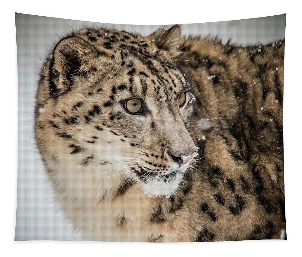 Triple D Tapestry featuring the photograph Snow Leopard by Teresa Wilson