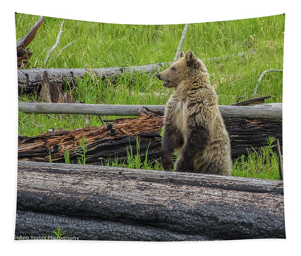 Snow Tapestry featuring the photograph Snow On Alert by Yeates Photography