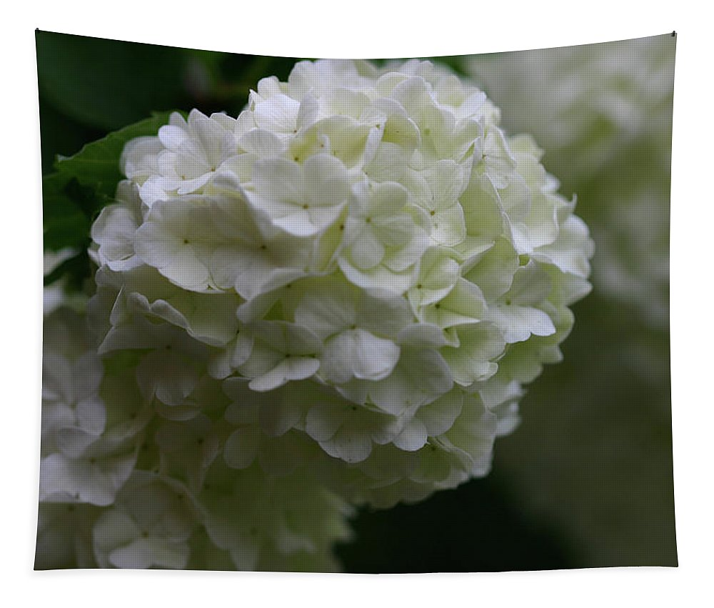 Snowball Tapestry featuring the photograph Snowball Bush by Michael Munster