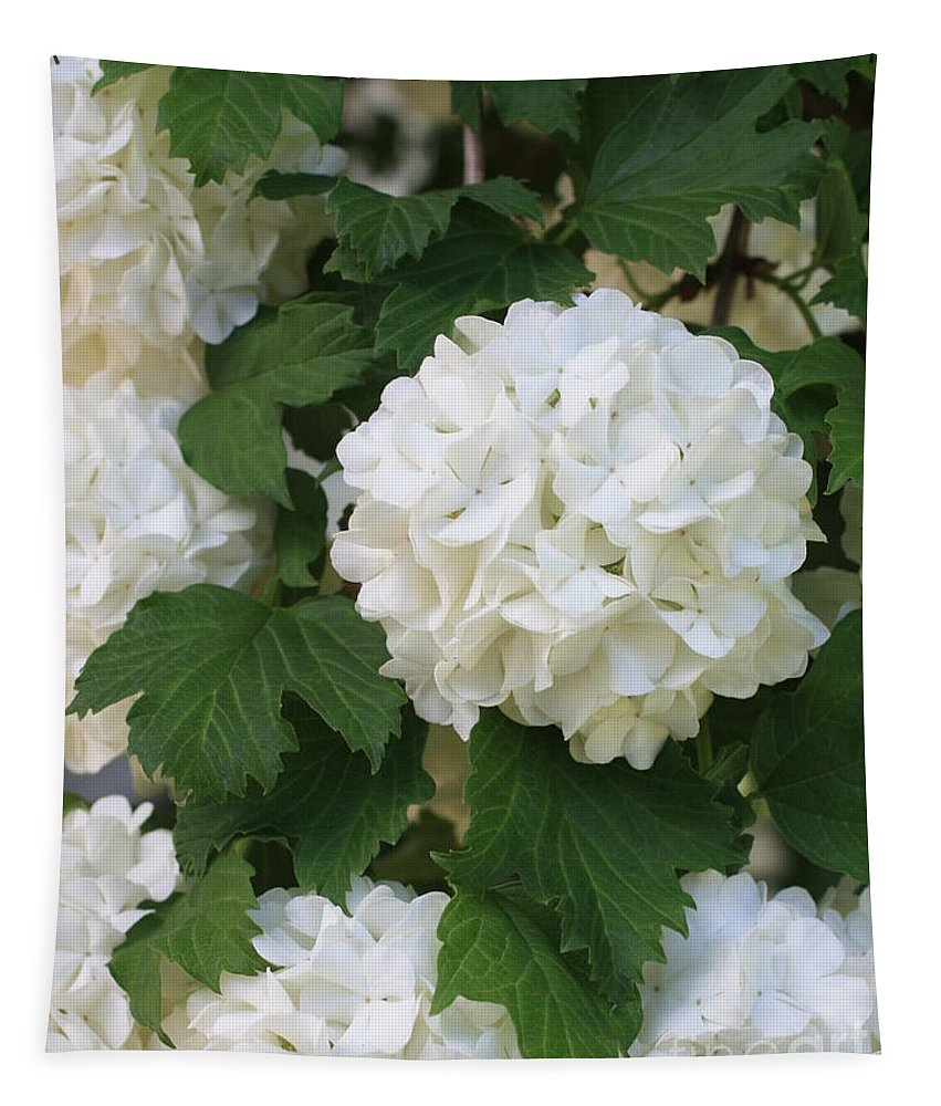 Snowball Tree Tapestry featuring the photograph Snowball Tree With Delicate Leaves by Carol Groenen