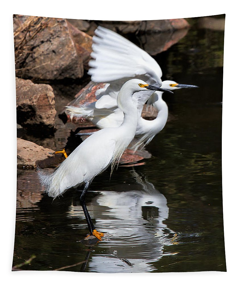 Egret Tapestry featuring the photograph Snowy Reflections by Jim Garrison