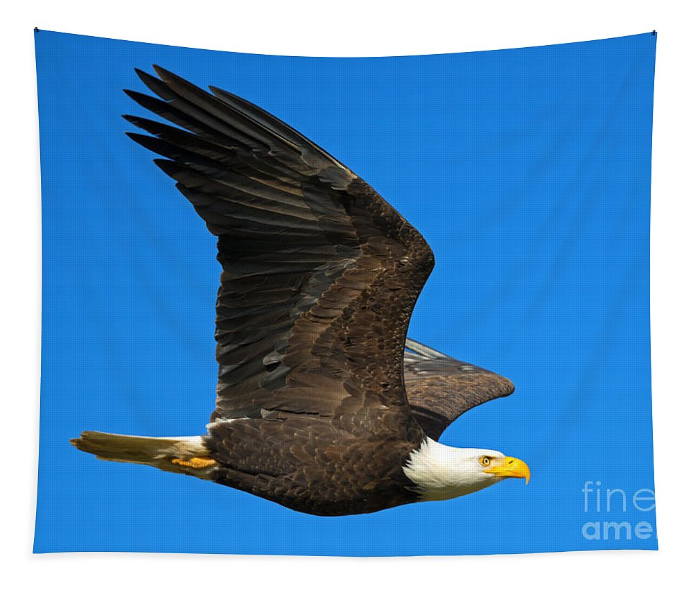American Bald Eagle Tapestry featuring the photograph Soar by Mike Dawson