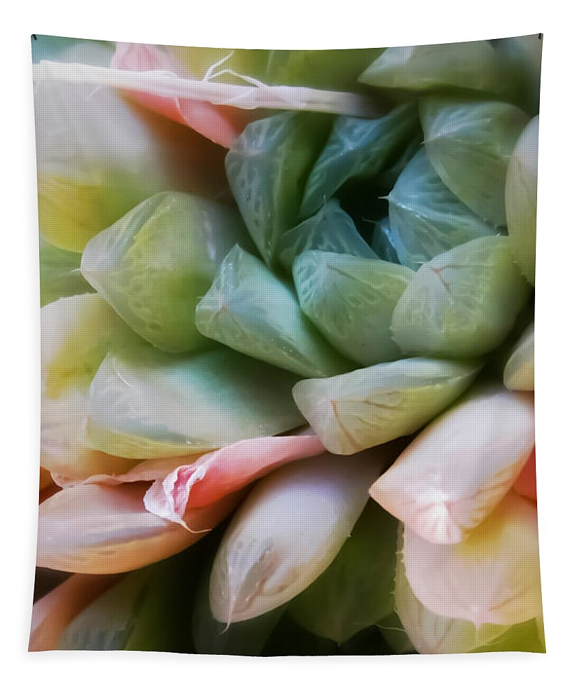 Soft Tapestry featuring the photograph Soft Natural Succulents by Heather Joyce Morrill