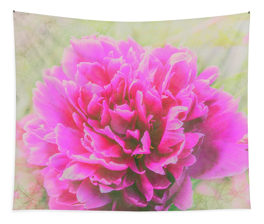 Flowers Tapestry featuring the photograph Soft Peony by Pamela Williams