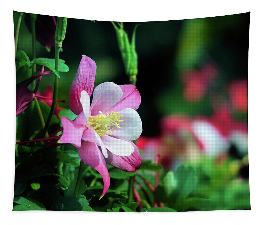 Wildflowers Tapestry featuring the photograph Soft Pink Columbine by Lynn Bauer