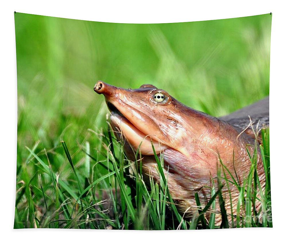 Soft Shell Turtle Tapestry featuring the photograph Soft Shell Turtle by Davids Digits