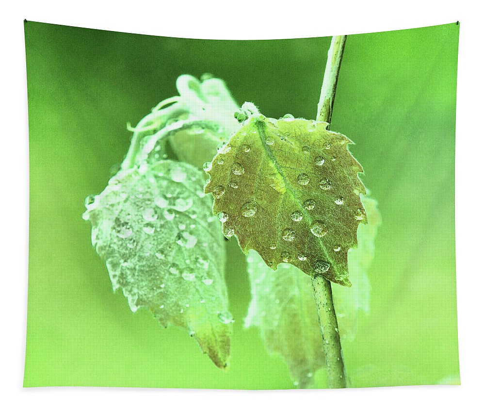 Rain Drops Tapestry featuring the photograph Soft Spring Rains by Susan Capuano