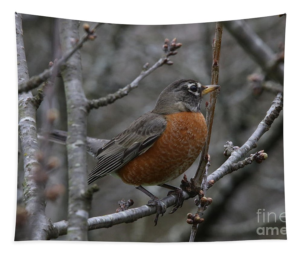 Robin Tapestry featuring the photograph Songbird Evening by Rachel Morrison