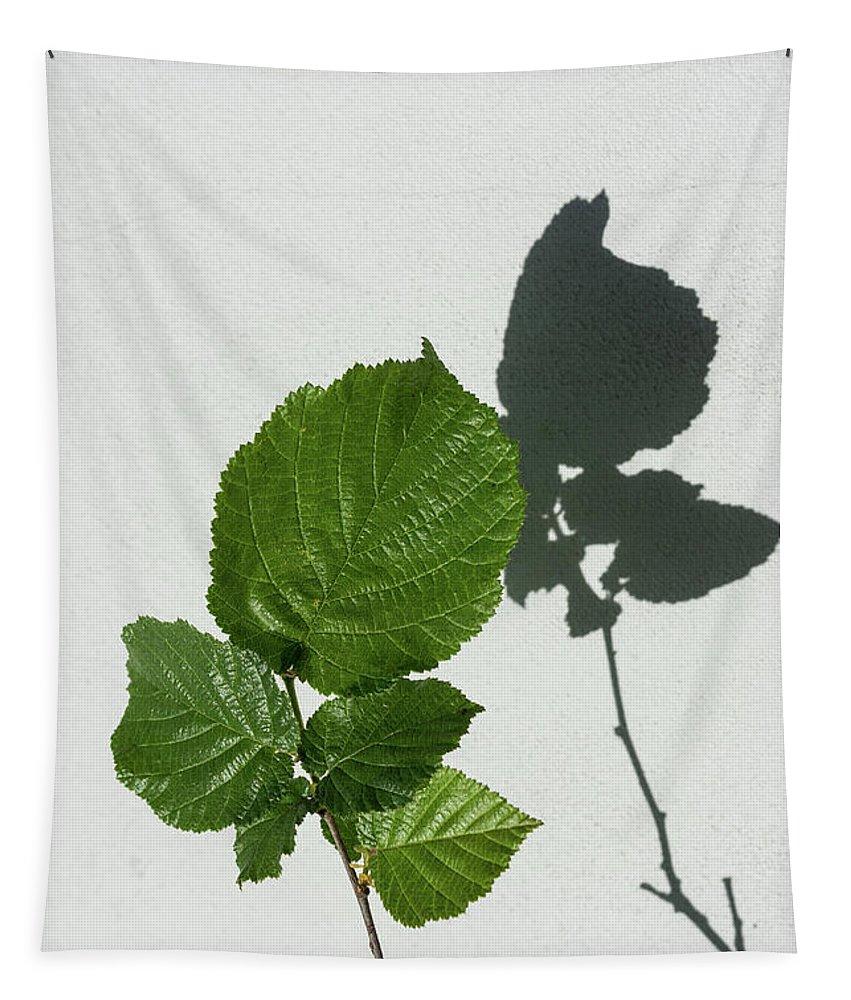 Georgia Mizuleva Tapestry featuring the photograph Sophisticated Shadows - Glossy Hazelnut Leaves On White Stucco - Vertical View Upwards Right by Georgia Mizuleva