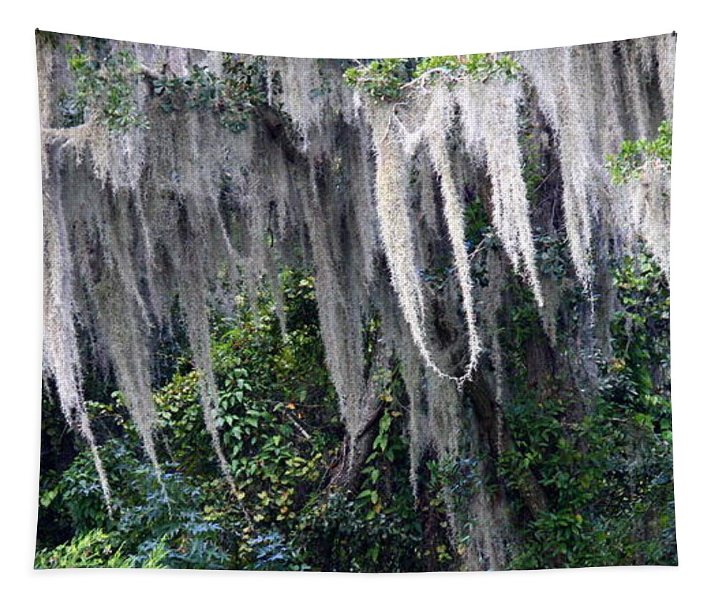Spanish Moss Tapestry featuring the photograph Spanish Moss Panorama by Carol Groenen