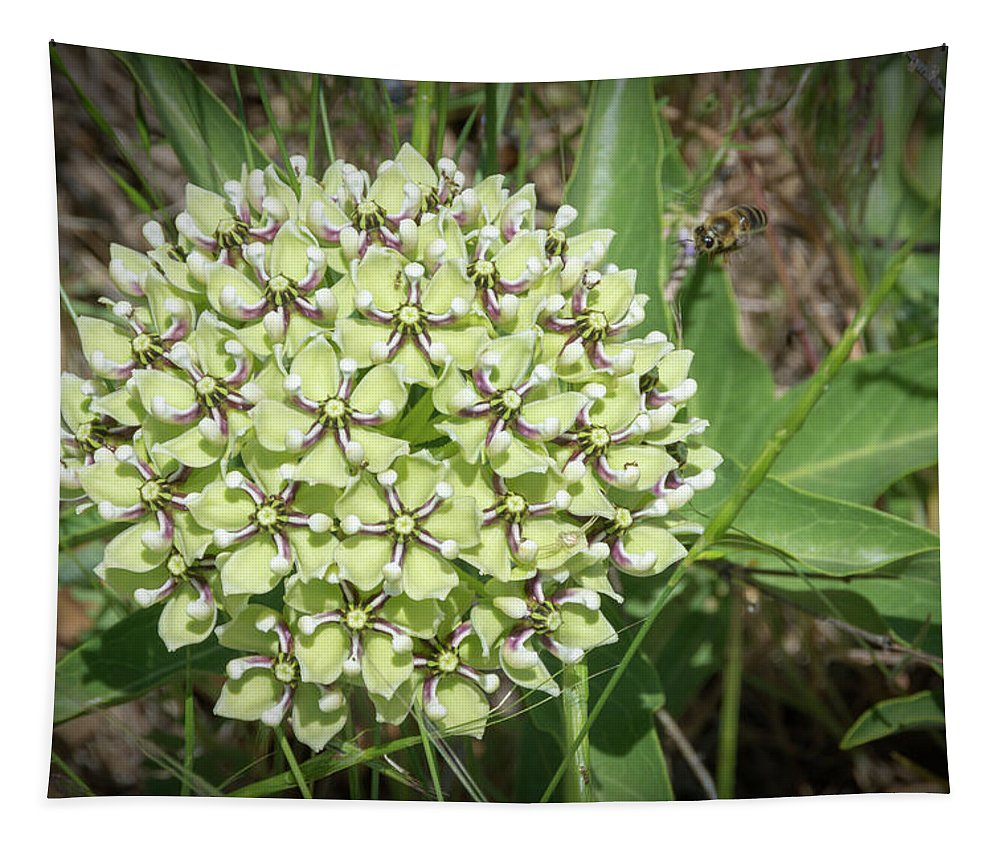 Spider Mildweed Tapestry featuring the photograph Spider Milkweed - Antelope Horns by Debra Martz