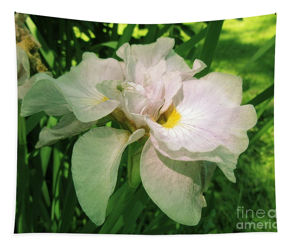 Iris Tapestry featuring the photograph Spider On Iris by Lyssjart Sj