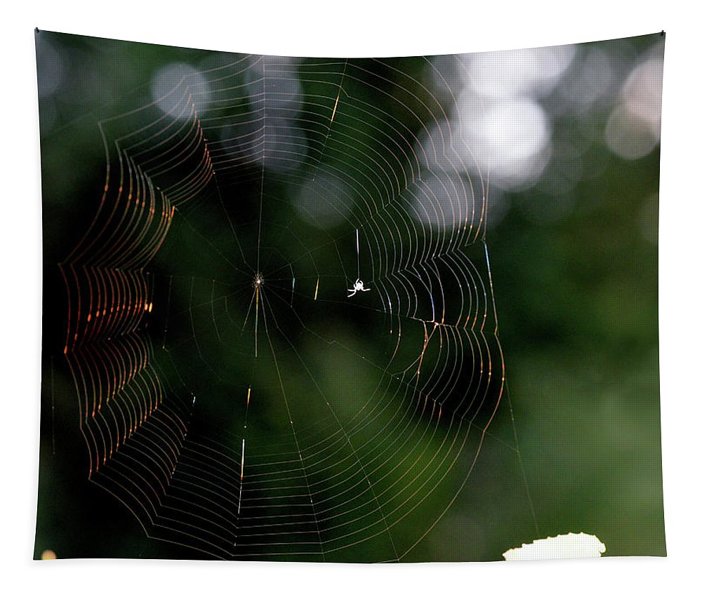 Spider Tapestry featuring the photograph Spinning My Web by Barbara Treaster