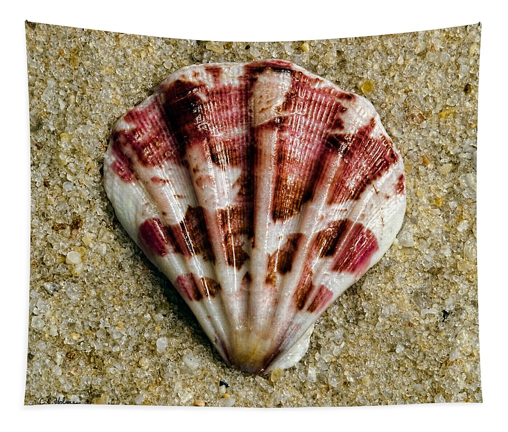 Shell Tapestry featuring the photograph Splash Of Magenta by Christopher Holmes