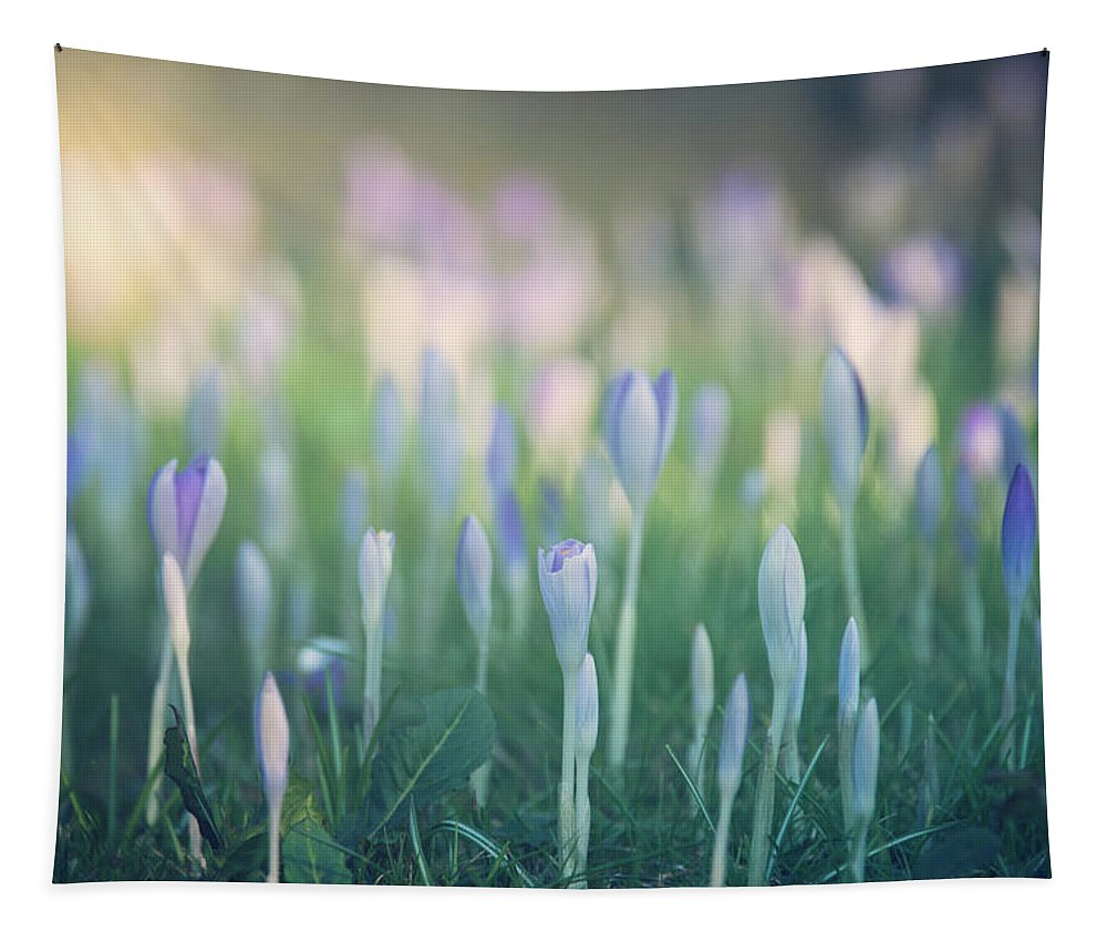 Bloom Tapestry featuring the photograph Spring Awakening by Monika Tymanowska