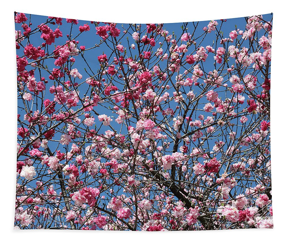 Spring Tapestry featuring the photograph Spring Blossoms Against Blue Sky by Carol Groenen