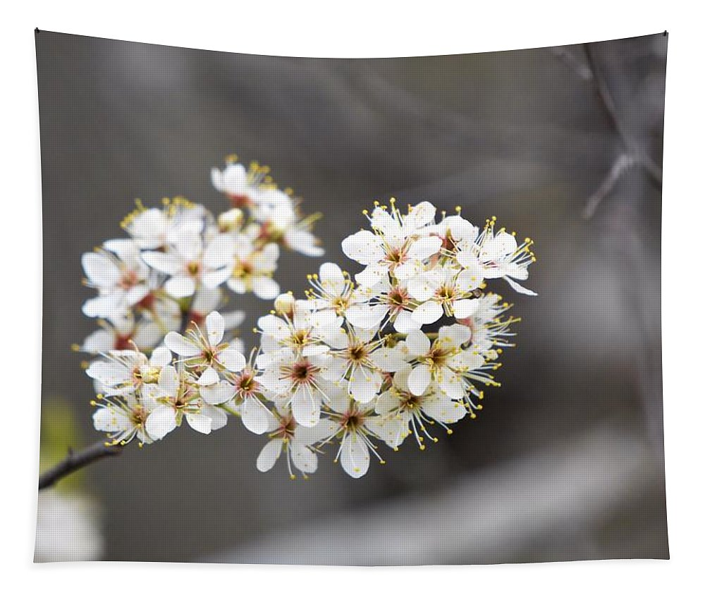 Spring Tapestry featuring the photograph Spring Blossoms by Bonfire Photography
