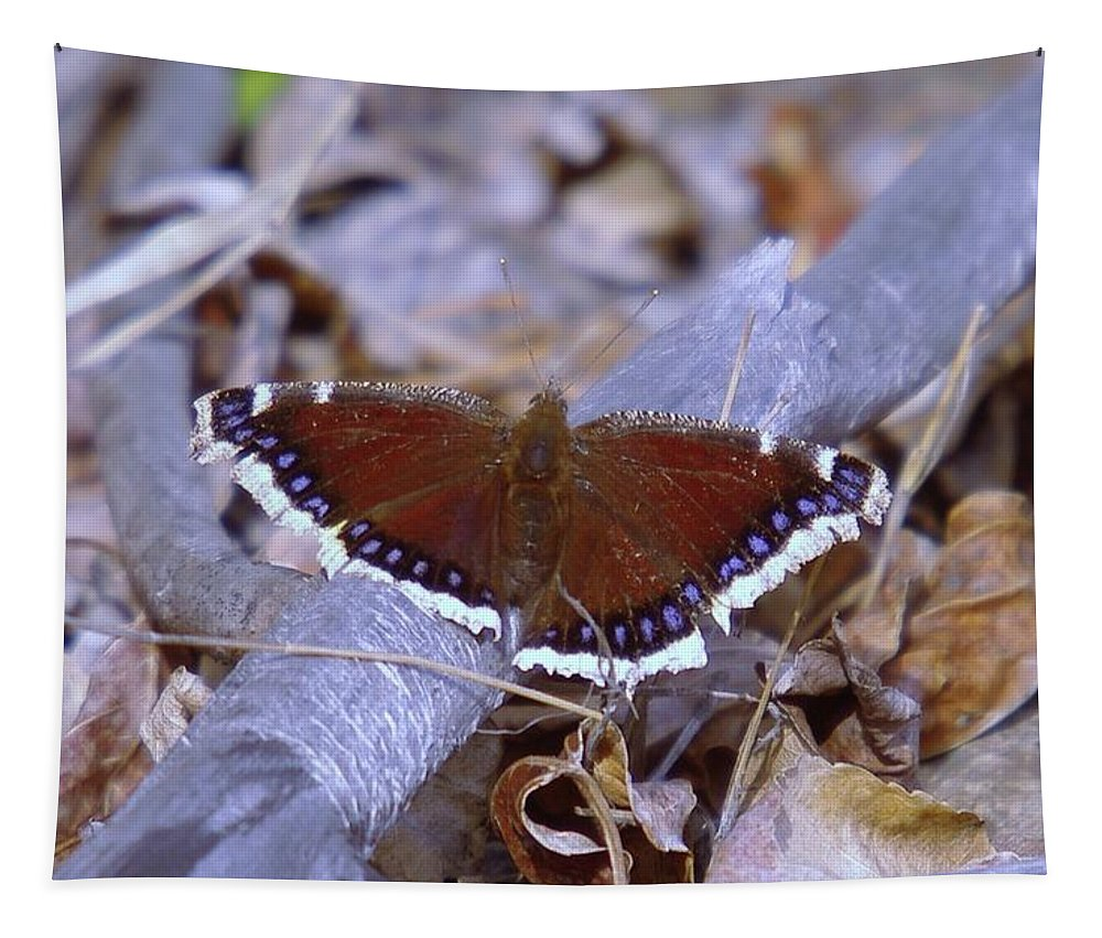 Butterflies Tapestry featuring the photograph Spring Butterfly by Jeff Swan