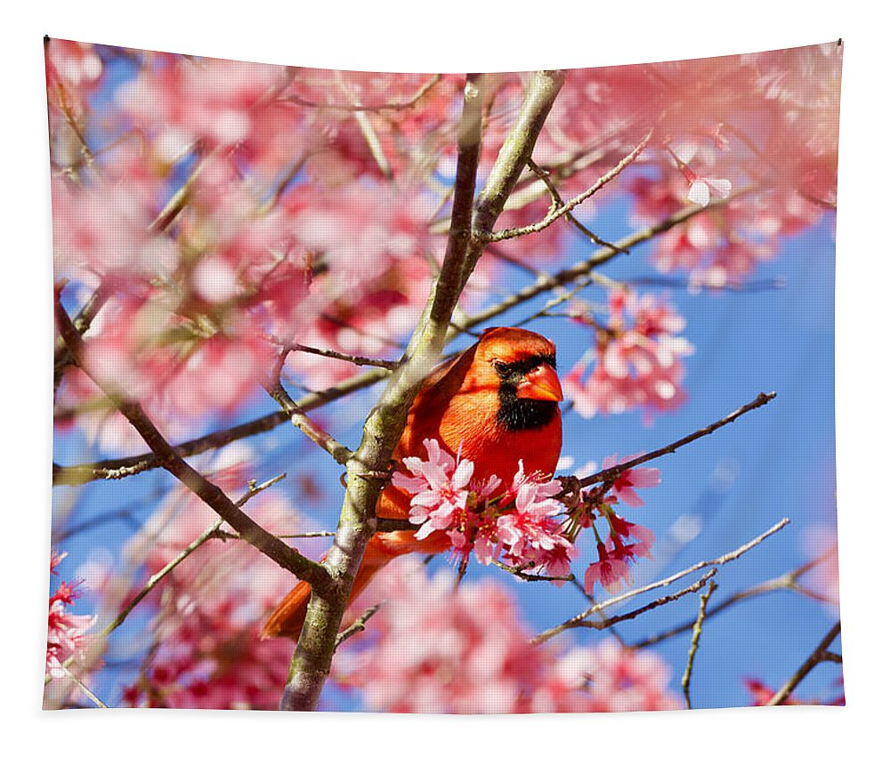 Cardinal Tapestry featuring the photograph Spring Cardinal by Rachel Morrison